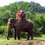 On the back of an elephant