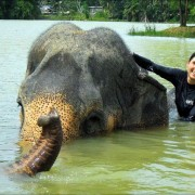 Baden mit Elefanten