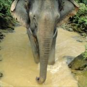 Sicher durch den Urwald Thailands auf dem Rücken eines Elefanten