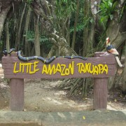 Little Amazon Takuapa