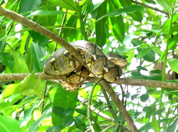 Hier leben auch viele Schlangen