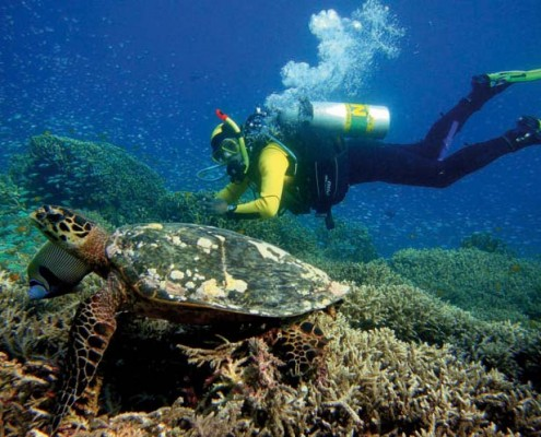 EAN Diver