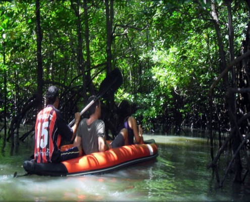 Cayaking in the Mangroves