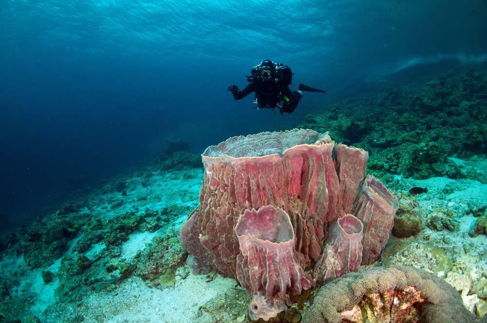 Schwamm - Khao Lak - Sea Turtle Divers