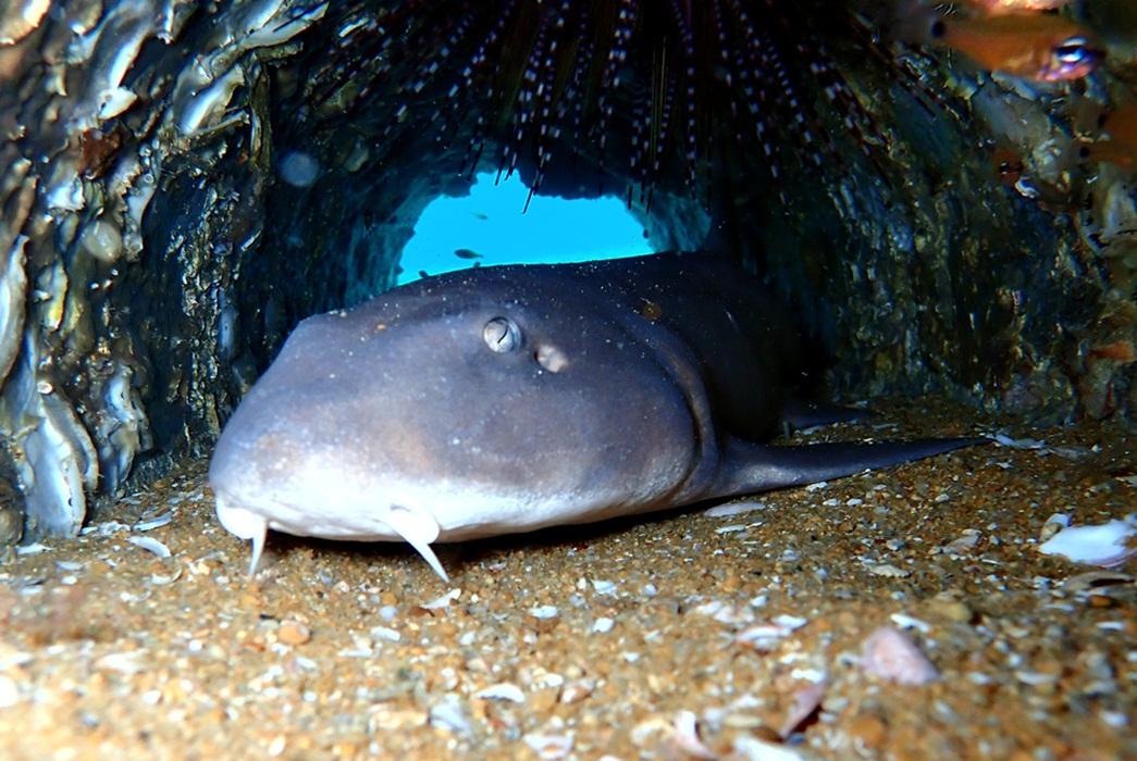 Haifische auf den Similans