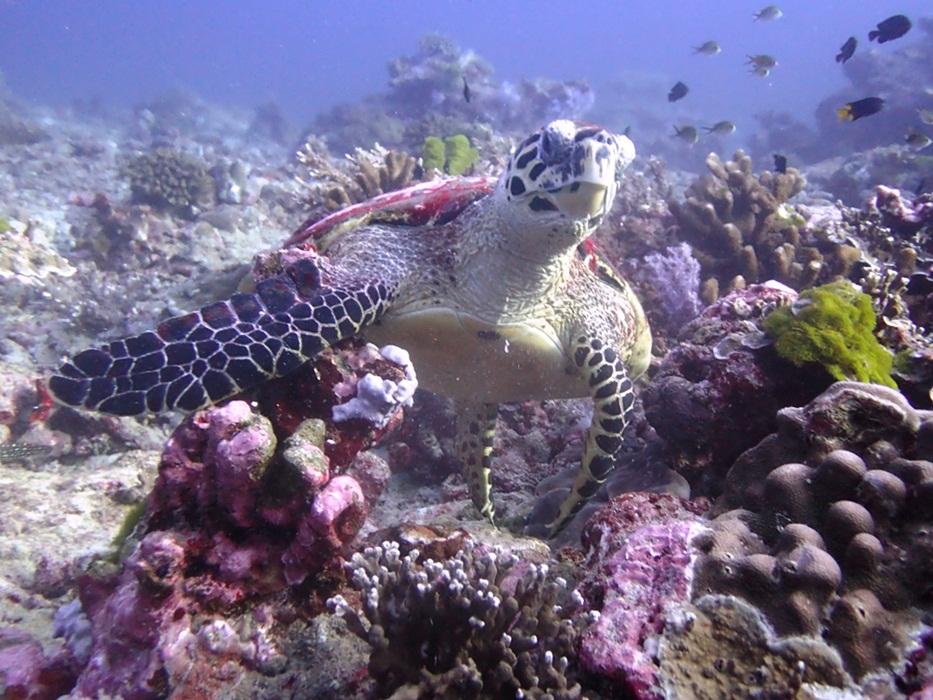 Schildkröten auf den Similans