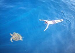 Schwimmen mit Turltes, Khao Lak, Turltes