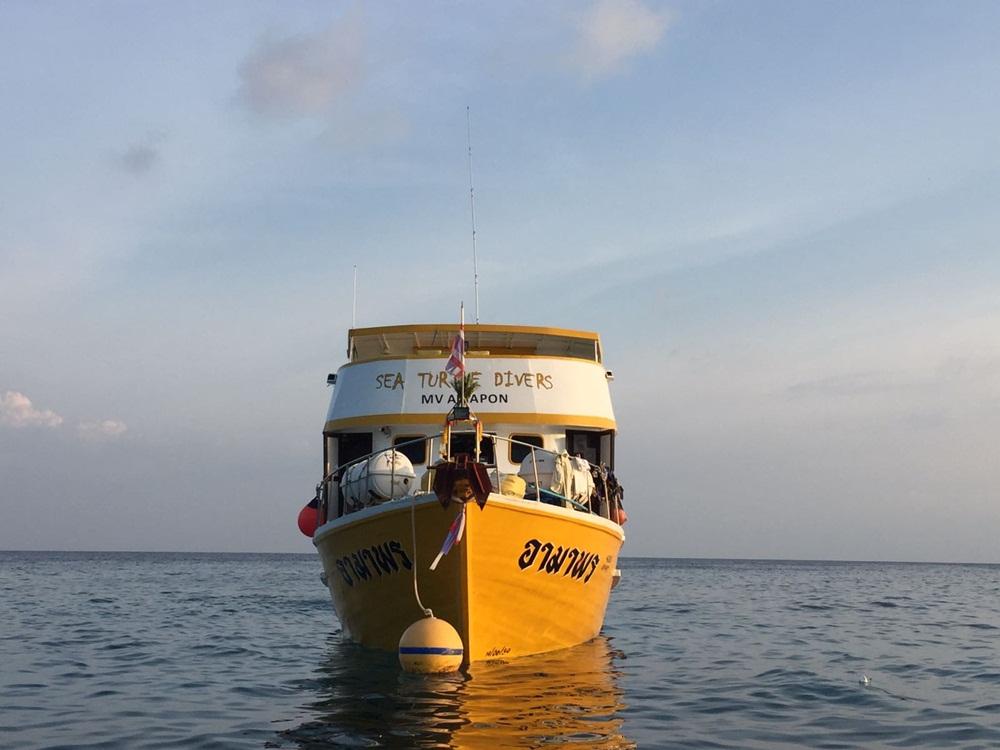 Sea Turtle Divers Tauchsafari Thailand