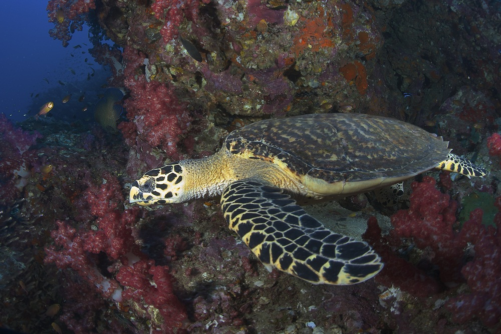 Sea Turtle Divers