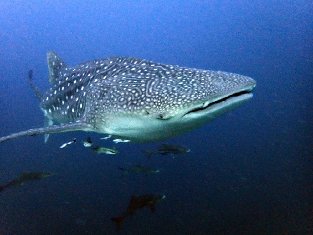 Unterwasserwelt Similans